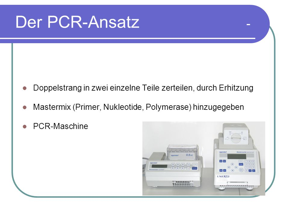 Der PCR-Ansatz - Doppelstrang in zwei einzelne Teile zerteilen, durch Erhitzung. Mastermix (Primer, Nukleotide, Polymerase) hinzugegeben.