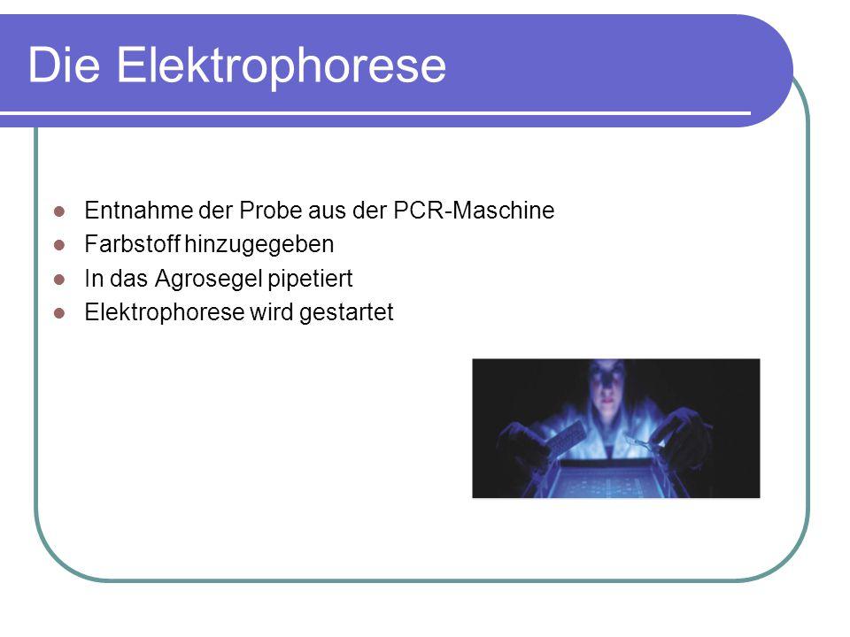 Die Elektrophorese Entnahme der Probe aus der PCR-Maschine