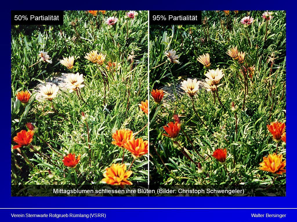 Mittagsblumen schliessen ihre Blüten (Bilder: Christoph Schwengeler)