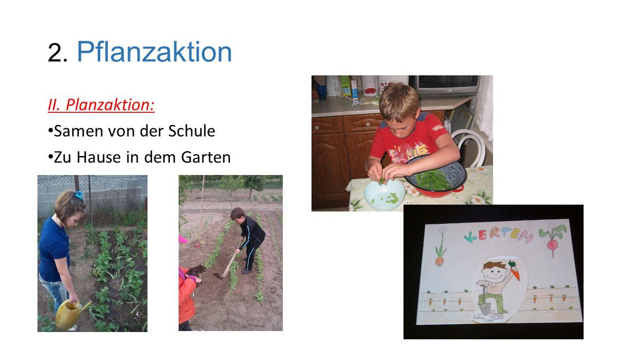 2. Pflanzaktion II. Planzaktion: Samen von der Schule