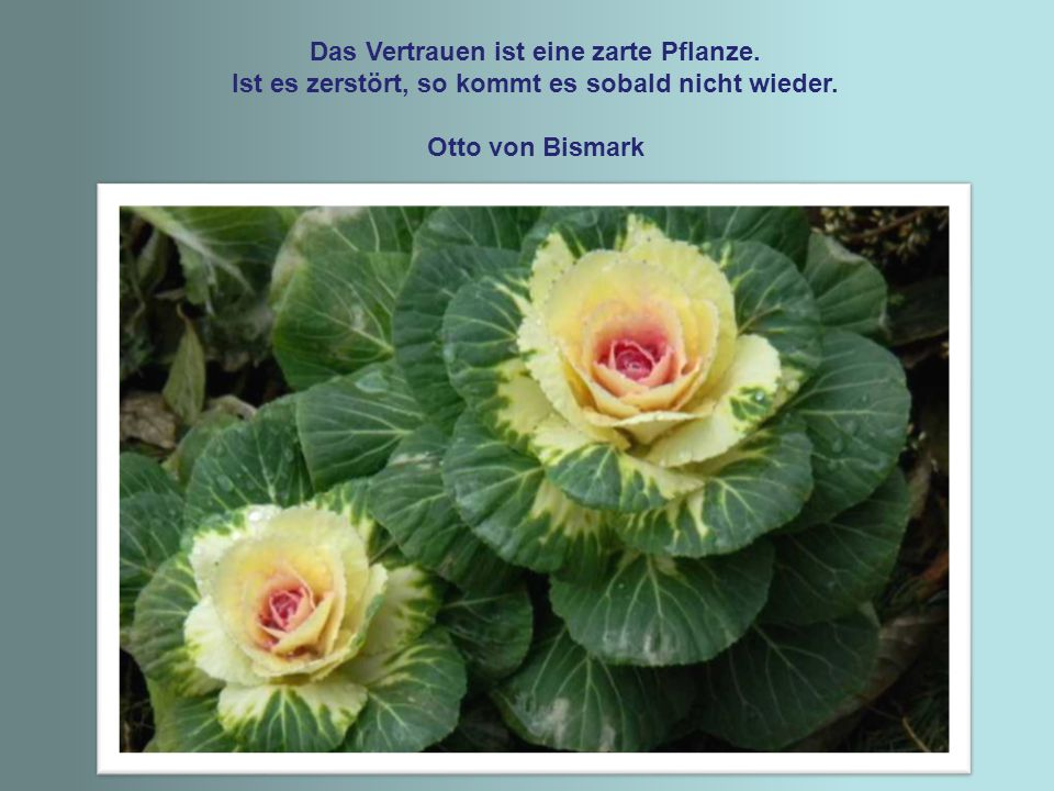 Das Vertrauen ist eine zarte Pflanze.