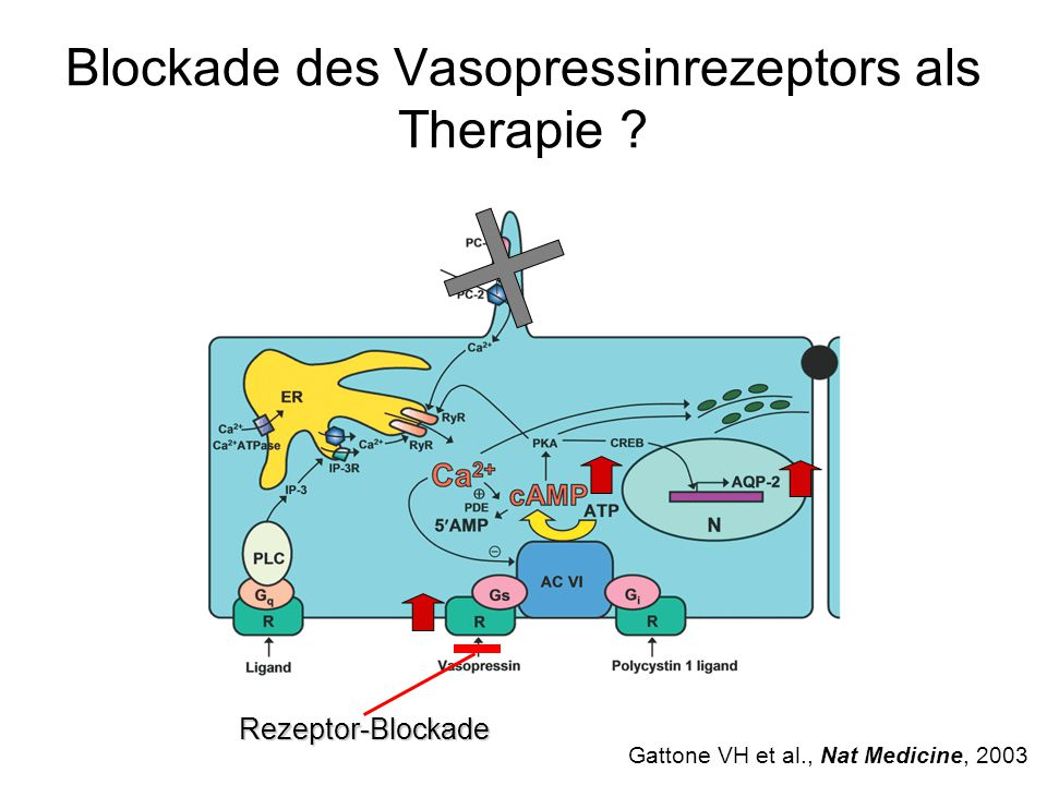Blockade des Vasopressinrezeptors als Therapie