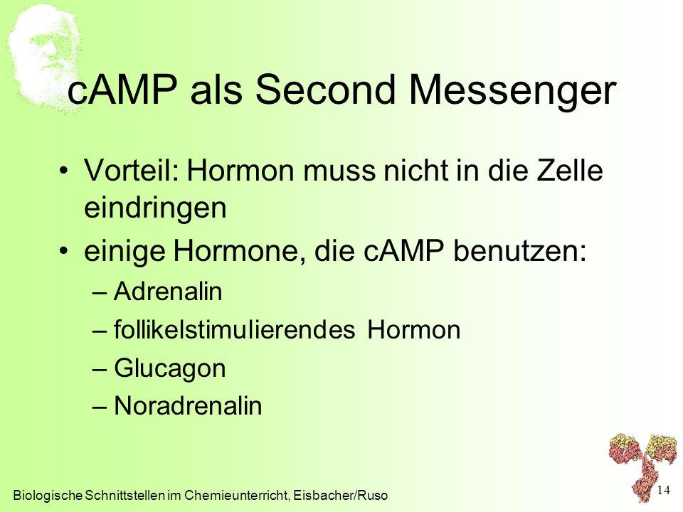 cAMP als Second Messenger