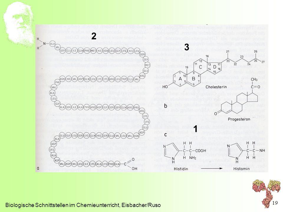 2 3 1 Biologische Schnittstellen im Chemieunterricht, Eisbacher/Ruso