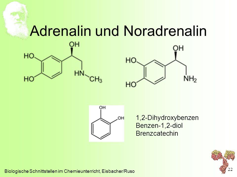 Adrenalin und Noradrenalin