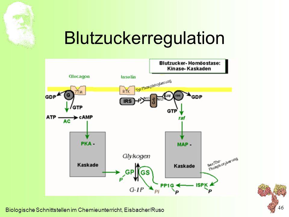 Blutzuckerregulation