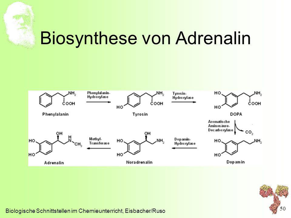 Biosynthese von Adrenalin