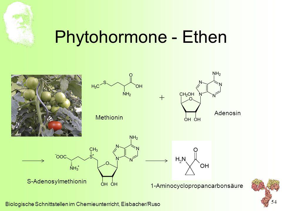 Phytohormone - Ethen + Adenosin Methionin S-Adenosylmethionin