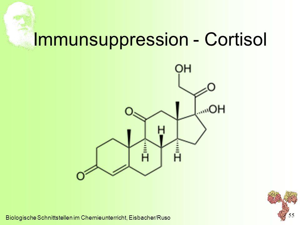 Immunsuppression - Cortisol