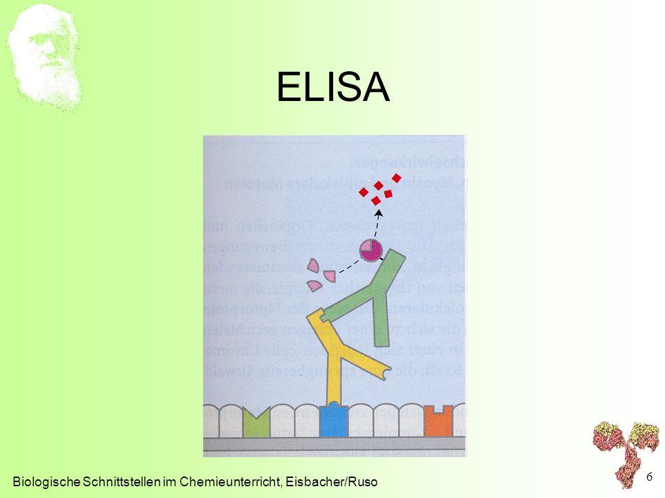 ELISA Biologische Schnittstellen im Chemieunterricht, Eisbacher/Ruso