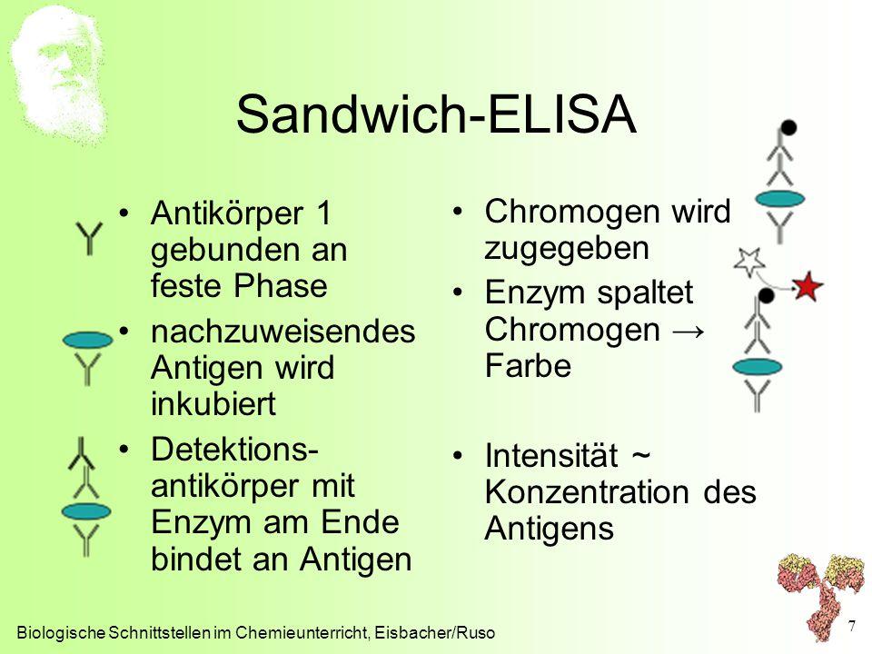 Sandwich-ELISA Antikörper 1 gebunden an feste Phase