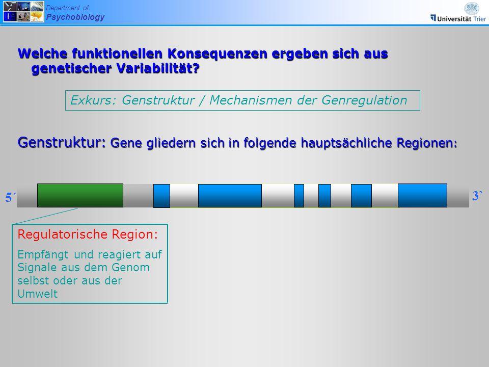 Genstruktur: Gene gliedern sich in folgende hauptsächliche Regionen: