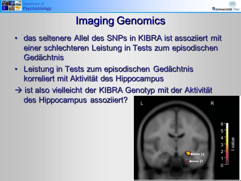 Imaging Genomics das seltenere Allel des SNPs in KIBRA ist assoziiert mit einer schlechteren Leistung in Tests zum episodischen Gedächtnis.