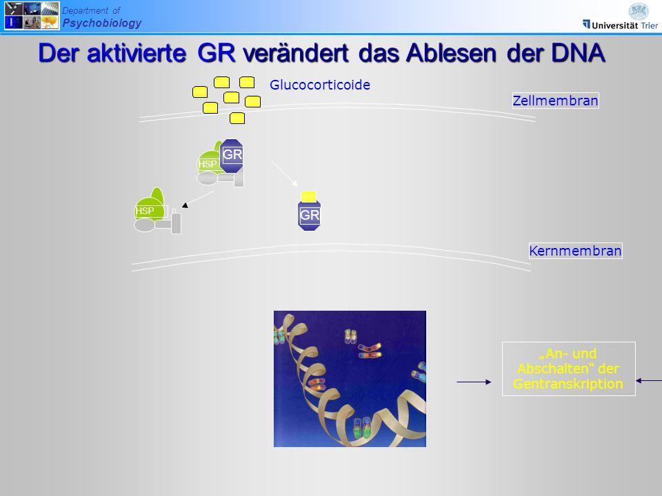 Der aktivierte GR verändert das Ablesen der DNA