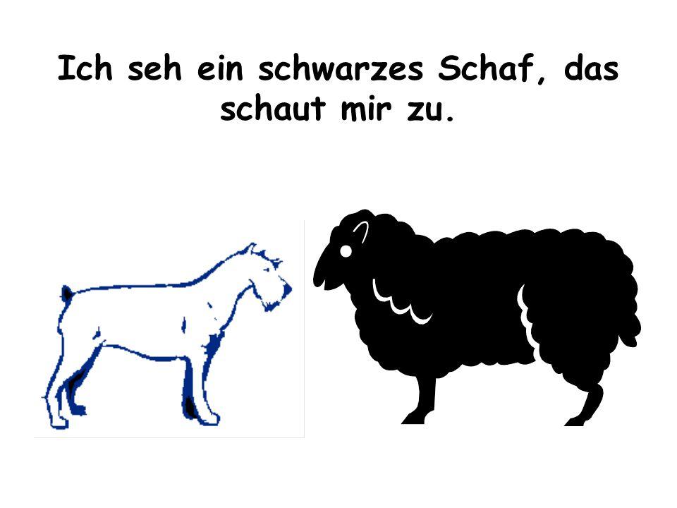 Ich seh ein schwarzes Schaf, das schaut mir zu.