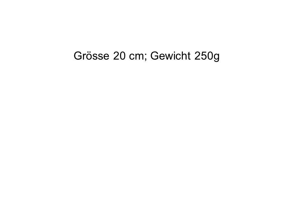 Grösse 20 cm; Gewicht 250g