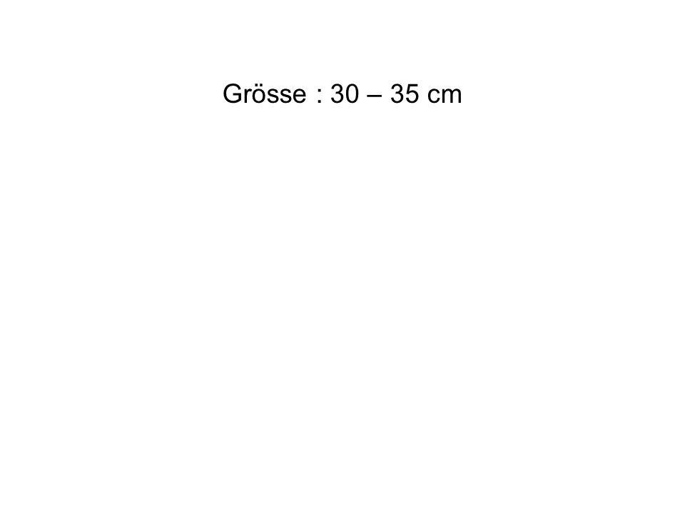 Grösse : 30 – 35 cm