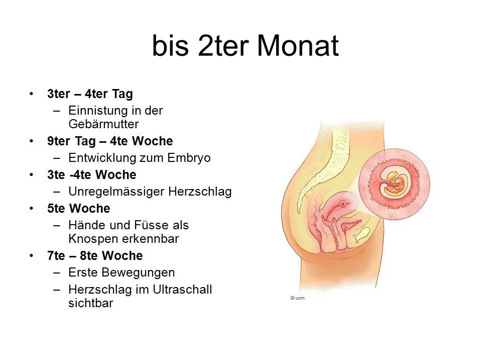 bis 2ter Monat 3ter – 4ter Tag Einnistung in der Gebärmutter