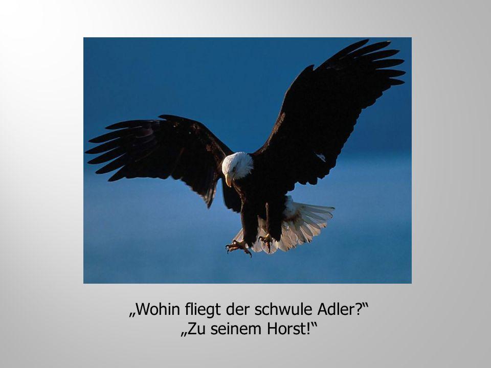 """""""Wohin fliegt der schwule Adler"""