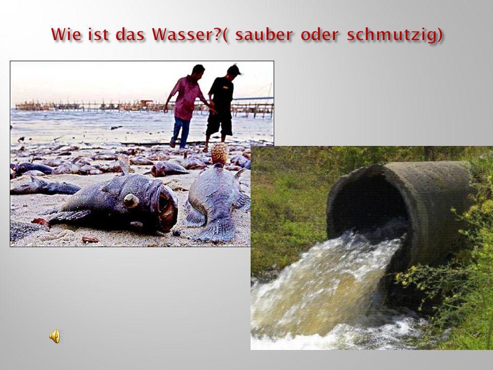 Wie ist das Wasser ( sauber oder schmutzig)