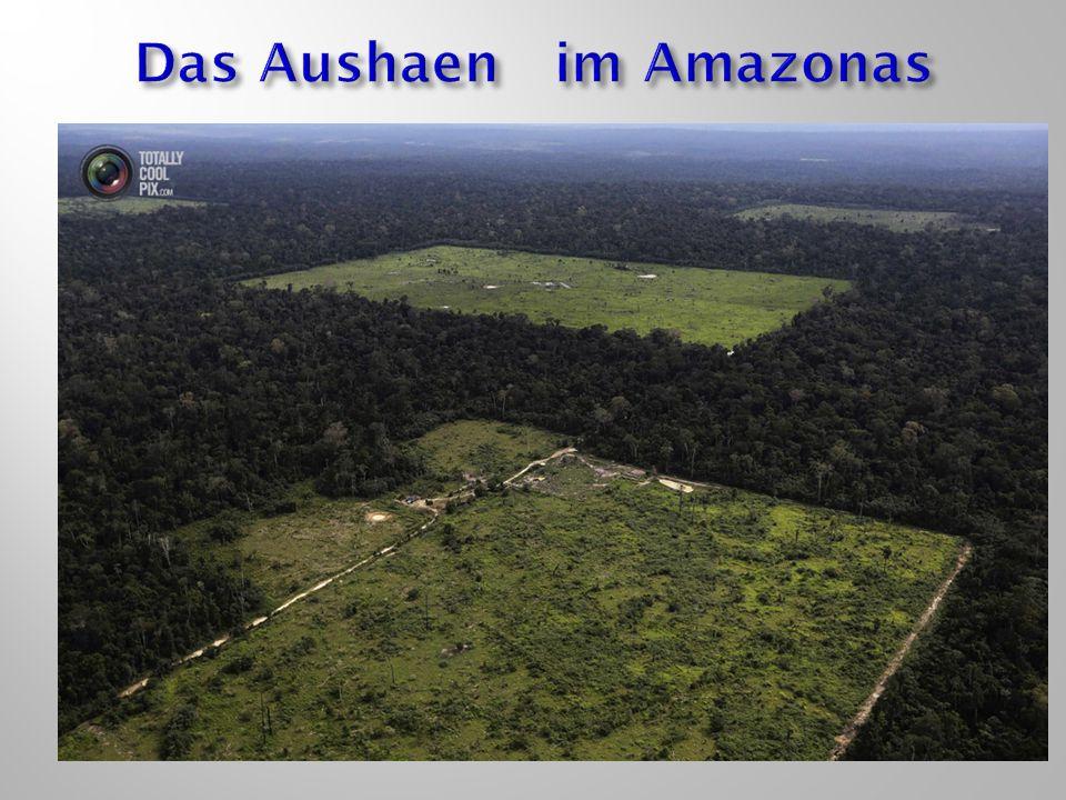 Das Aushaen im Amazonas