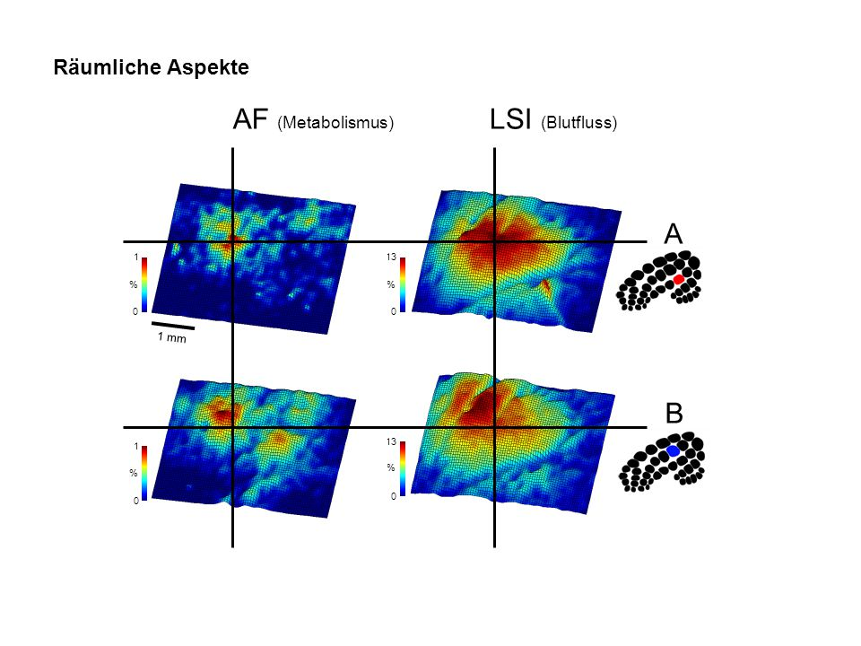 AF (Metabolismus) LSI (Blutfluss) A B Räumliche Aspekte