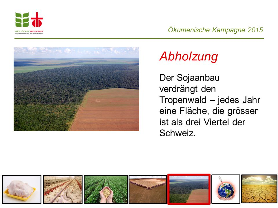Abholzung Der Sojaanbau verdrängt den Tropenwald – jedes Jahr eine Fläche, die grösser ist als drei Viertel der Schweiz.