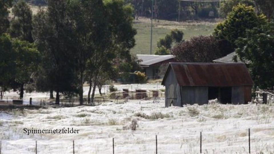 Spinnennetzfelder