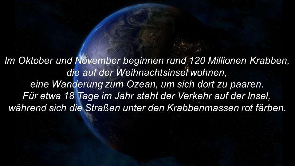 Im Oktober und November beginnen rund 120 Millionen Krabben,