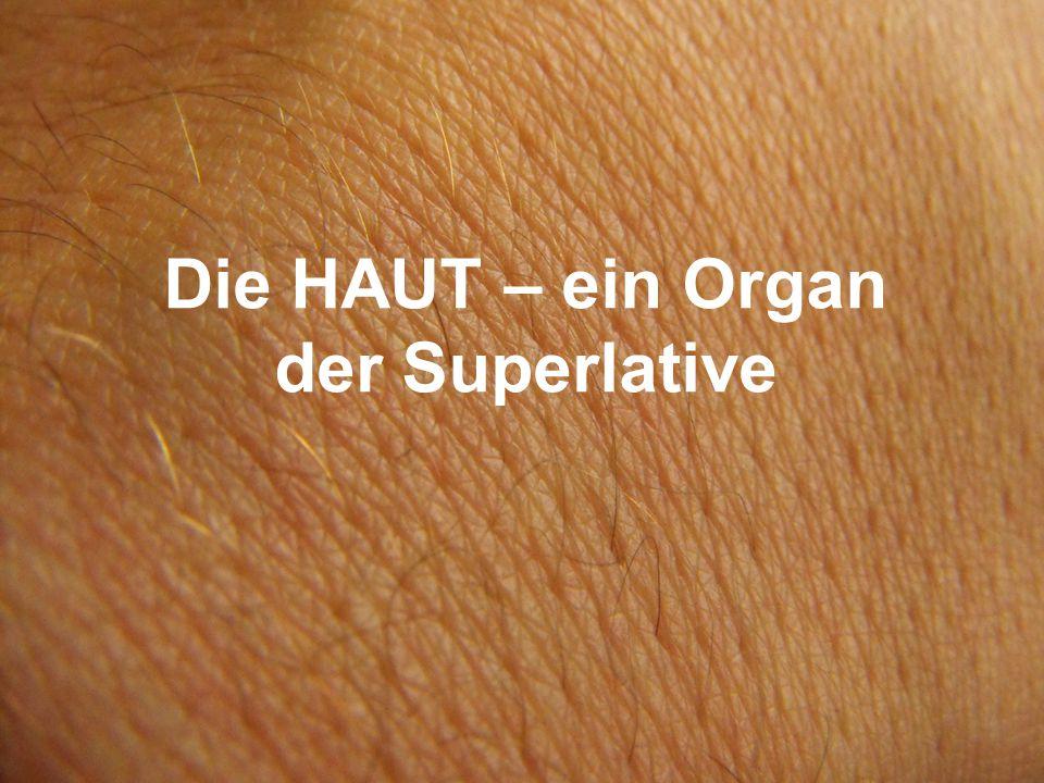 Die HAUT – ein Organ der Superlative