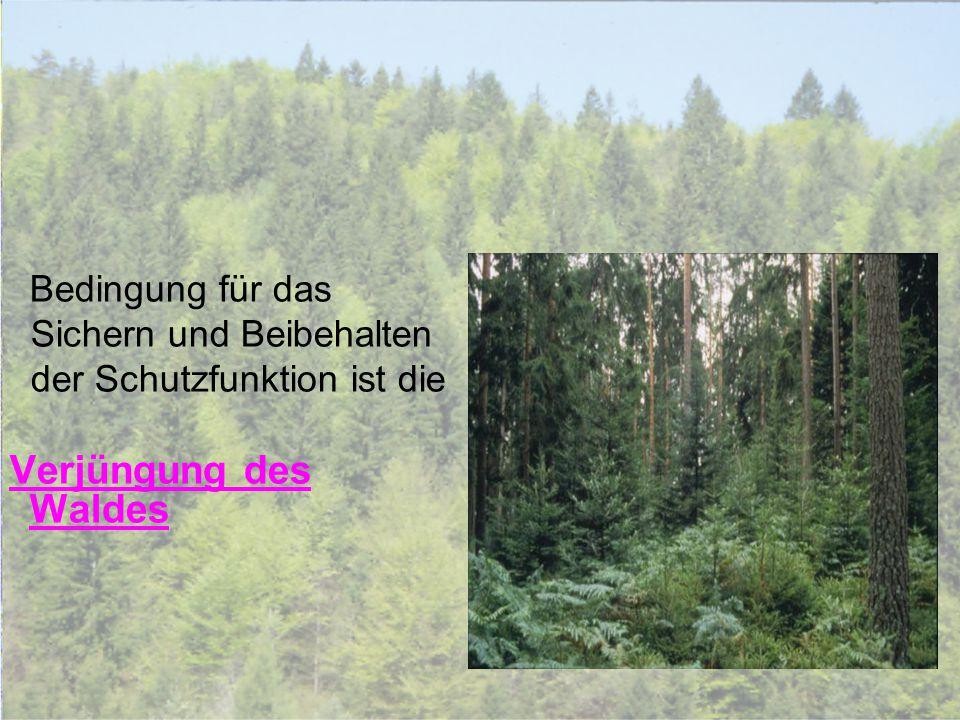Verjüngung des Waldes Sichern und Beibehalten