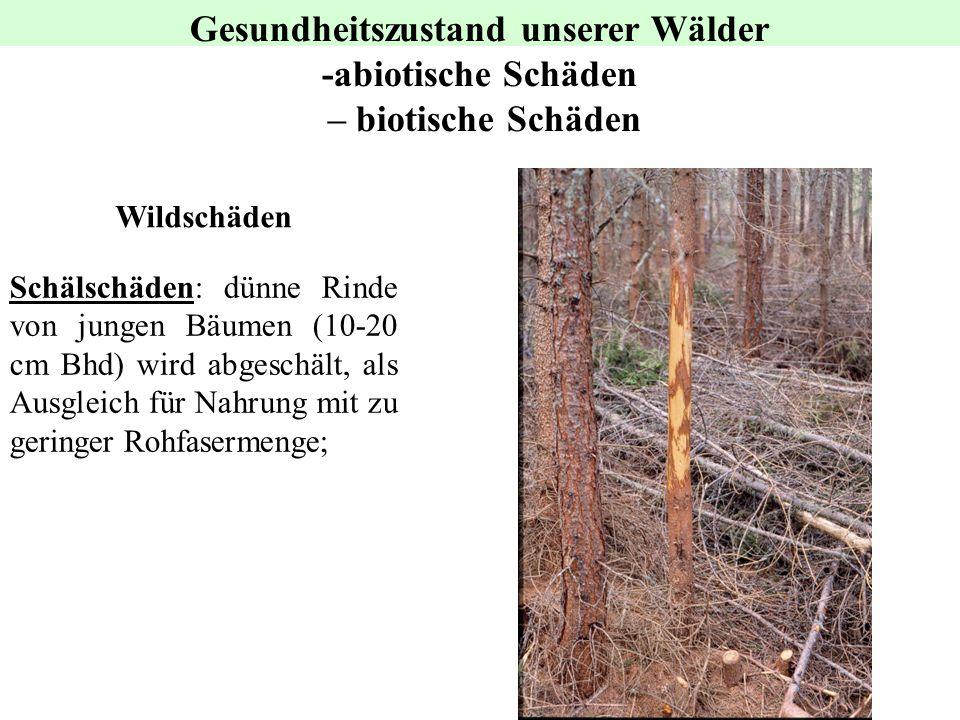 Gesundheitszustand unserer Wälder