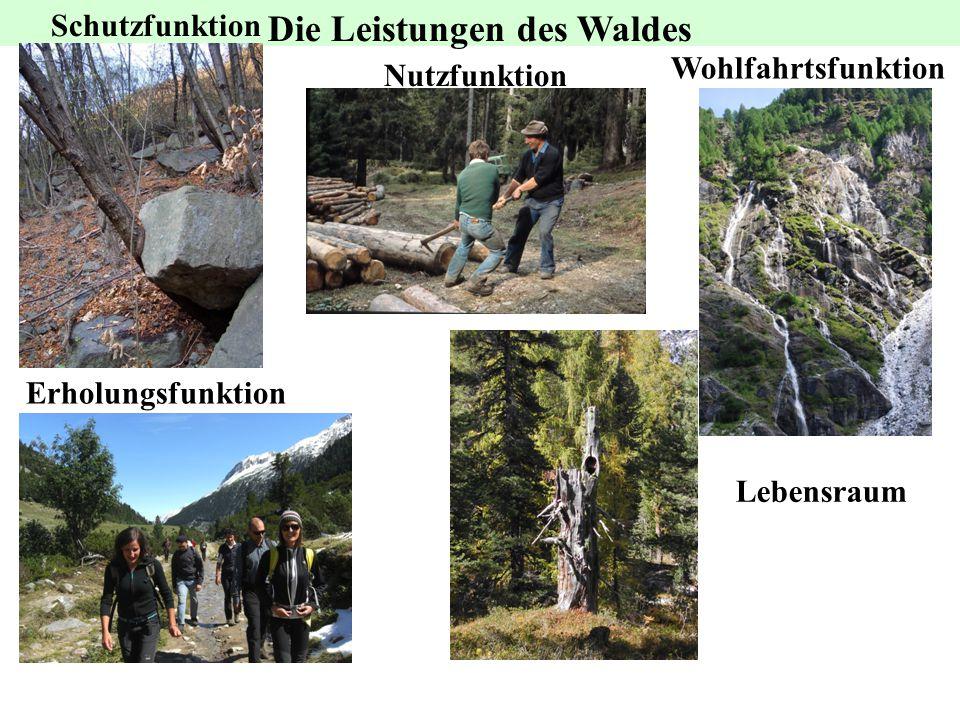 Die Leistungen des Waldes