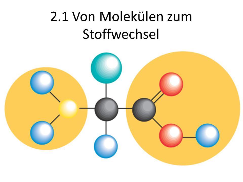 2.1 Von Molekülen zum Stoffwechsel