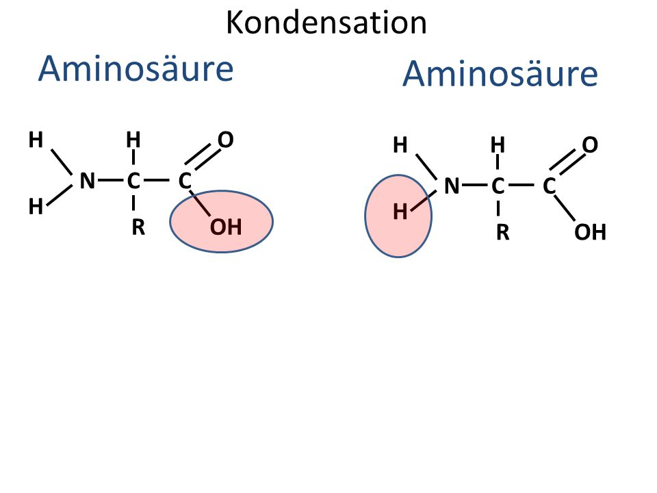 Aminosäure Aminosäure Kondensation H H O H H O N C C N C C H H R OH R