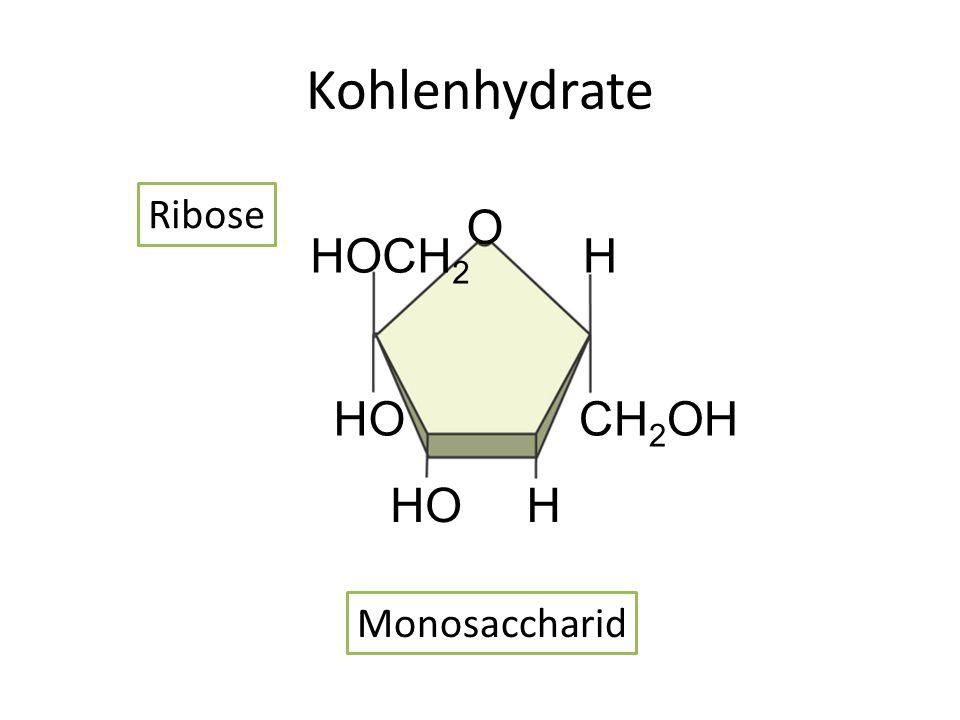 Kohlenhydrate Ribose HOCH2 CH2OH HO H O Monosaccharid