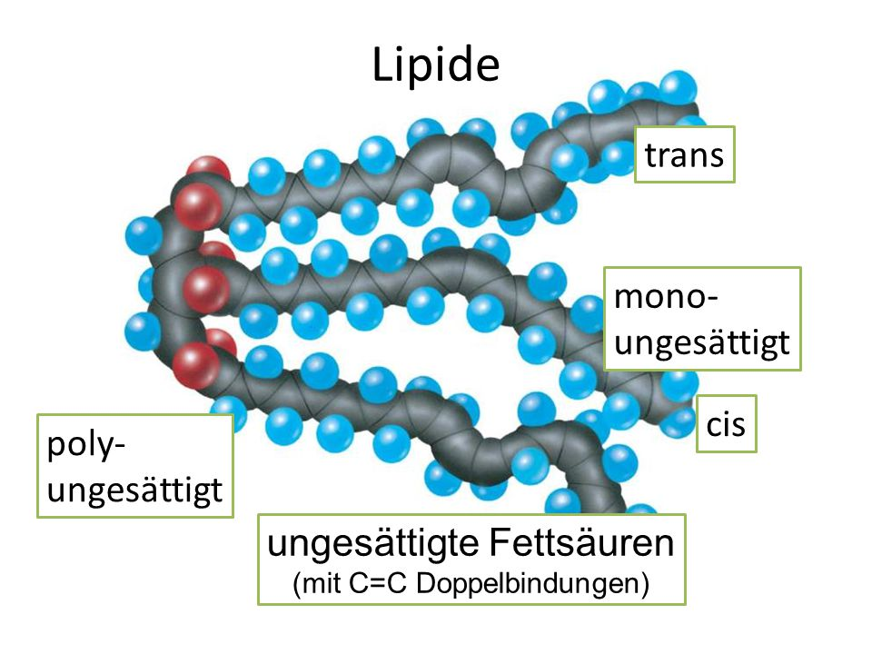 Lipide trans mono- ungesättigt cis poly- ungesättigt