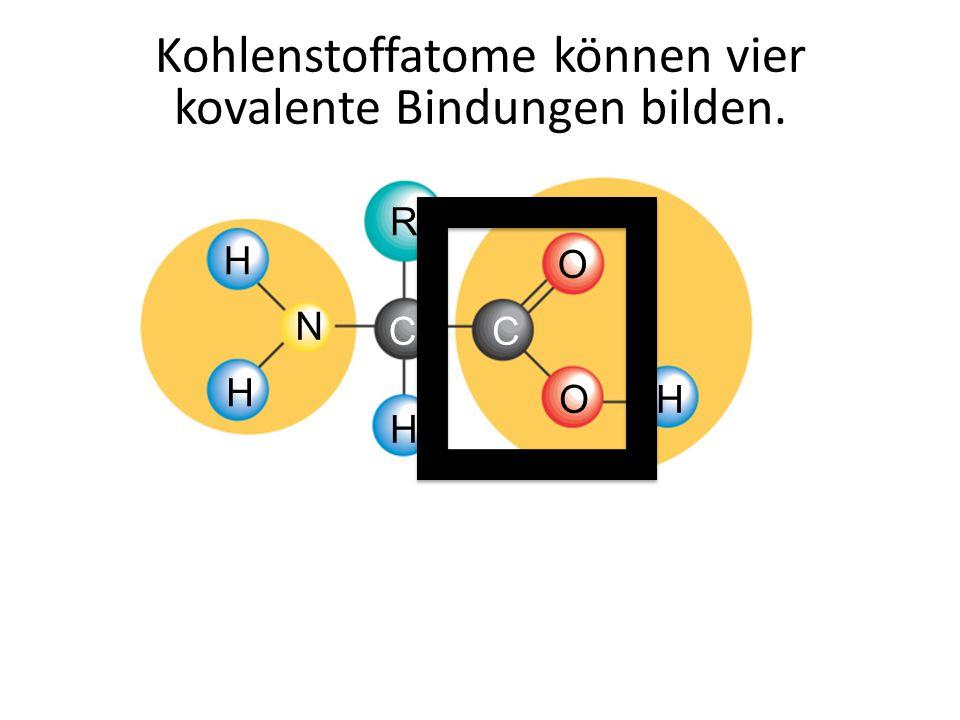 Kohlenstoffatome können vier kovalente Bindungen bilden.