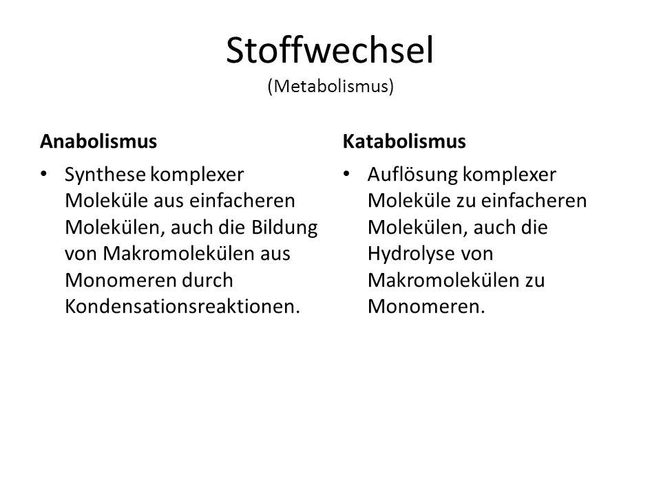 Stoffwechsel (Metabolismus)