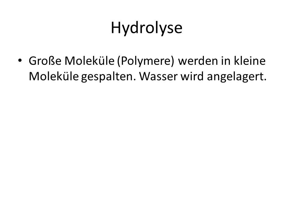 Hydrolyse Große Moleküle (Polymere) werden in kleine Moleküle gespalten. Wasser wird angelagert.