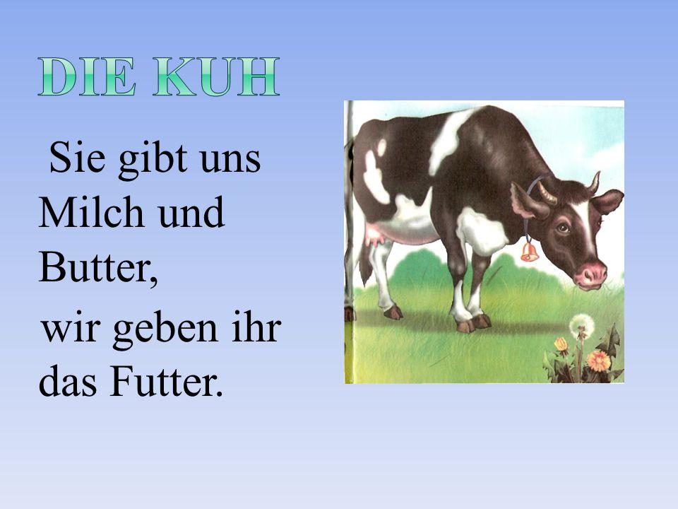 die Kuh Sie gibt uns Milch und Butter, wir geben ihr das Futter.
