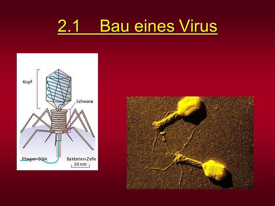 2.1 Bau eines Virus