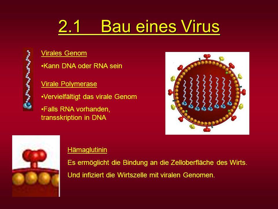2.1 Bau eines Virus Virales Genom Kann DNA oder RNA sein