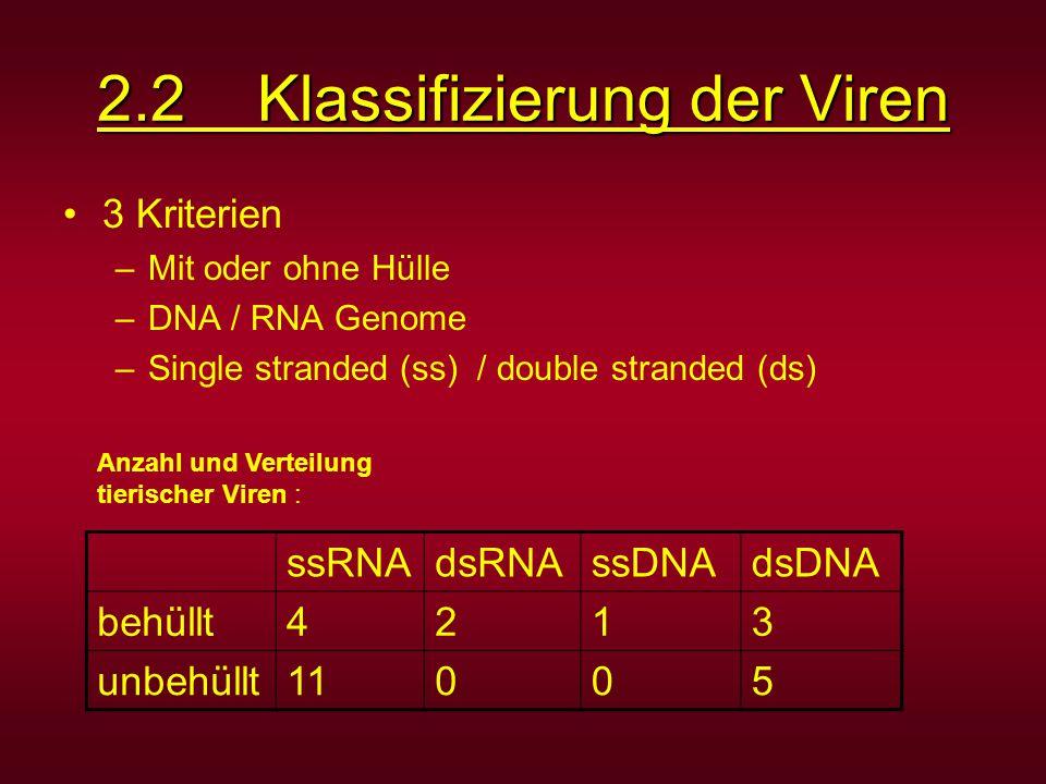 2.2 Klassifizierung der Viren