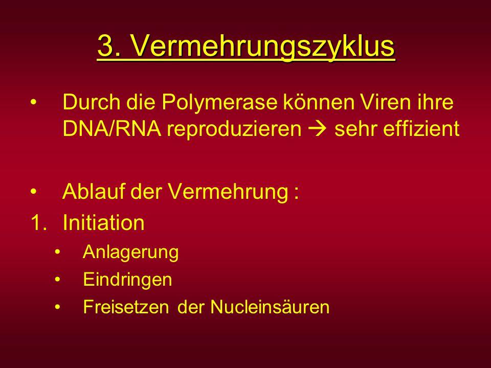 3. Vermehrungszyklus Durch die Polymerase können Viren ihre DNA/RNA reproduzieren  sehr effizient.