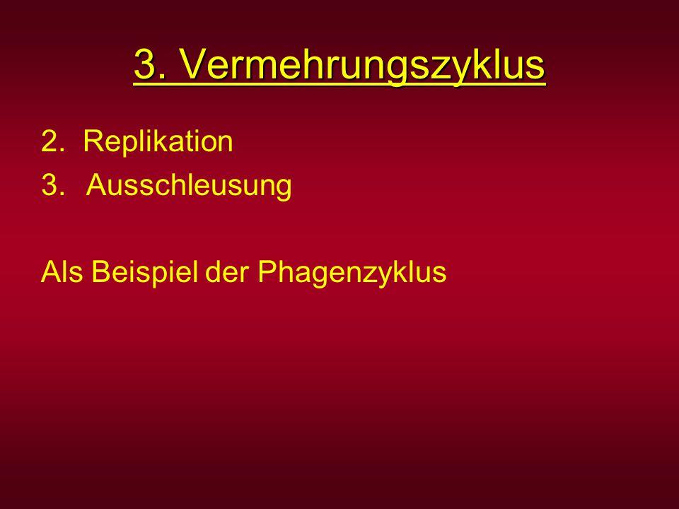 3. Vermehrungszyklus 2. Replikation Ausschleusung