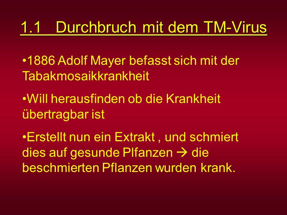 1.1 Durchbruch mit dem TM-Virus