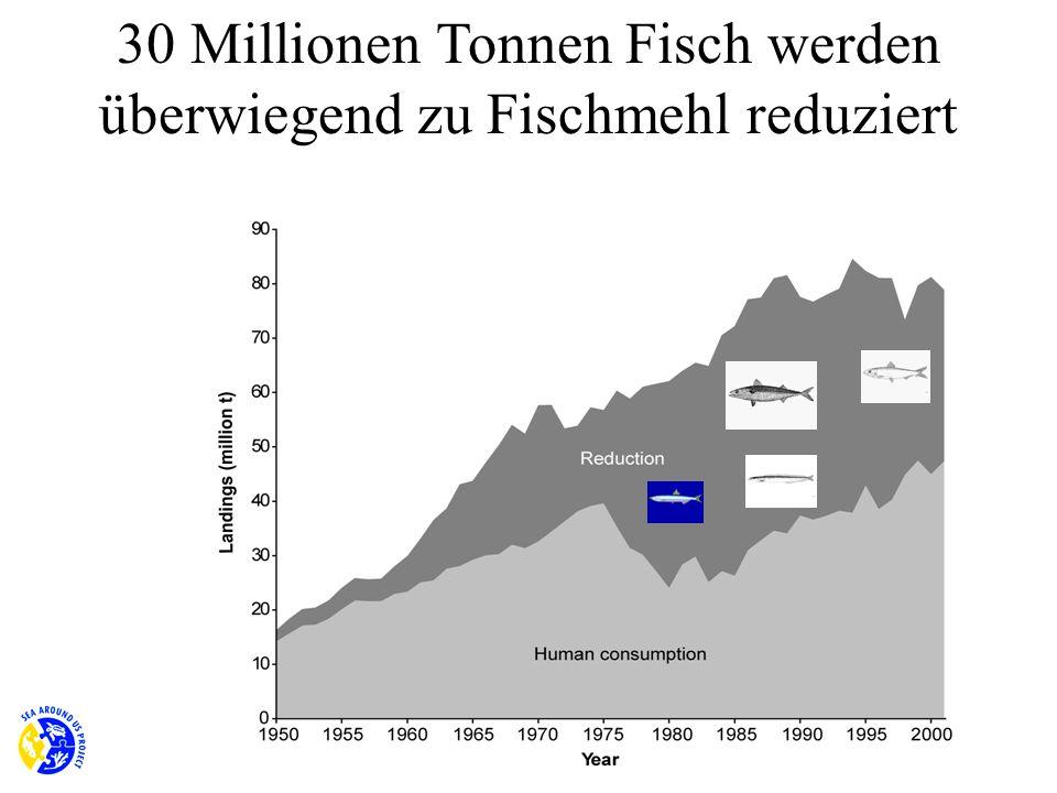 30 Millionen Tonnen Fisch werden überwiegend zu Fischmehl reduziert