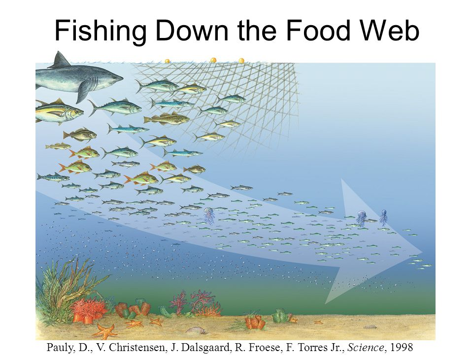 Fishing Down the Food Web