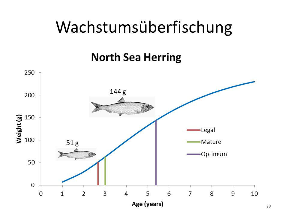 Wachstumsüberfischung